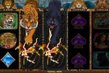 Exotic Cats Mobile Online Slot New from Microgaming August 2018
